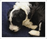 Bailey's Puppy at 4 weeks