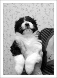 Bailey's Puppy at 5 weeks