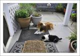 Bailey and Panda