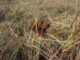 Otis In The Dune Grass