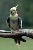 Parrot Fashion 26/03