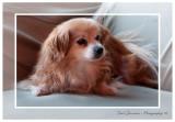 Pawtrait Pet Photography