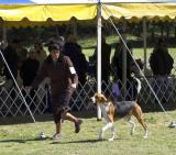 Dog Shows