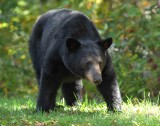 Black Bear Medaows NP Va