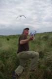 Kees Camphuysen bestudeert de ecologie van zilver en kleine mantelmeeuw