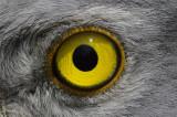 De stichting Werkgroep Grauwe Kiekendief zendert voort