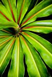 ti plant RD- 560