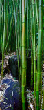 Bamboo RD-651
