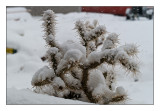 Small cactus in snow