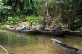 Boats for palm wine