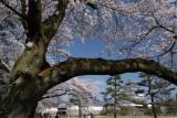 Tsuruga_jo park, Aizu