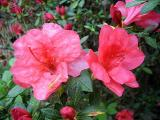 Garden StateSalmon
