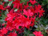 'Wallowa Red'