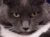 cat watching.JPG