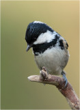 Posing like a Kingfisher