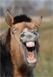 Also horses go crazy ;)