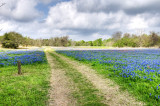 Bluebonnets - Washington On The Brazos SP