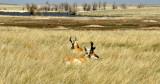 _APR2950 Buffalo Gap Grasslands