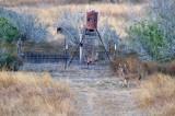 DEC_0081 Juvenile Whitetail Bucks