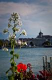 Along Lake Geneva 4