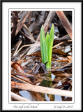 New Life in the Marsh