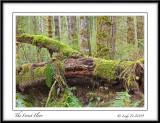 Vancouver Island Landscapes
