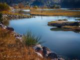 Autumn in the River Estuary