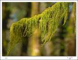 Mossy Branch.