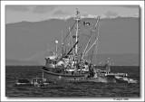 Herring Fishing Boat