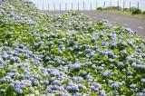 Flores  08.jpg