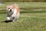 Becky's Dog