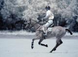 Horse w/ Rider