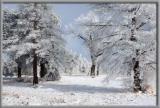 Snow Scenic