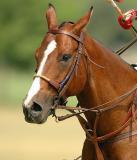 Polo - Horses & Riders