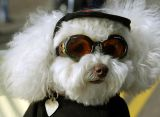 Doggles, Biker Dog Eyewear