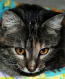 Izetta's Kitty