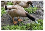 A Duck-worthy Feast