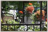 IMG_2177 Mon balcon fleuri0001.jpg