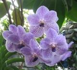 106_0670_Orchidées.jpg