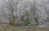 frosted gate. (stiperstones)