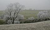 hoar frost (stiperstones)