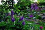 2009 Darlene's garden -1st place Kobashi award
