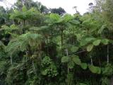 ...as in ferns the size of trees!