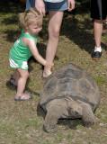 Turtle  2009