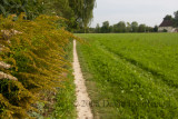 path near Jettingen station