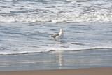 bird in ocean