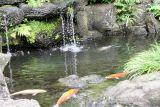 fish at park