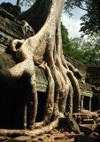 Ta Phrom temple, Nr Siem Reap Cambodia