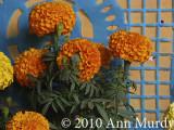 Marigolds and papel picado