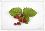 Fruits défendus